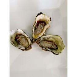 Huîtres N°2 Bouzigues...