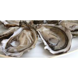 Huîtres de Bouzigues n°2 -...